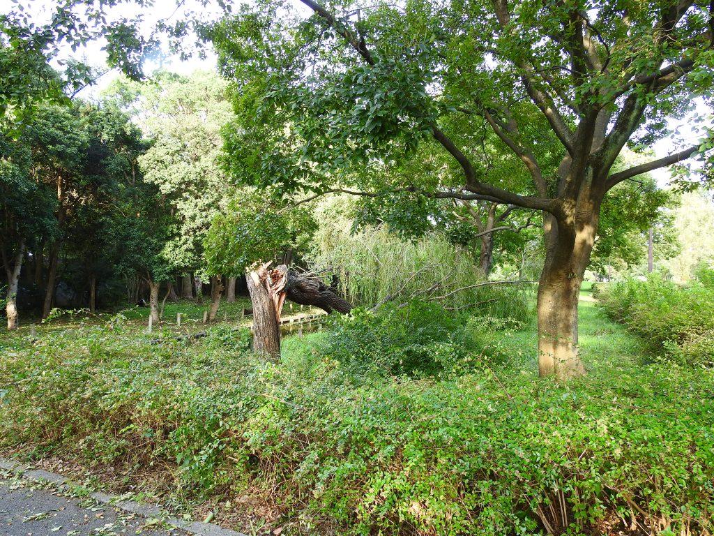 台風で倒れた樹木