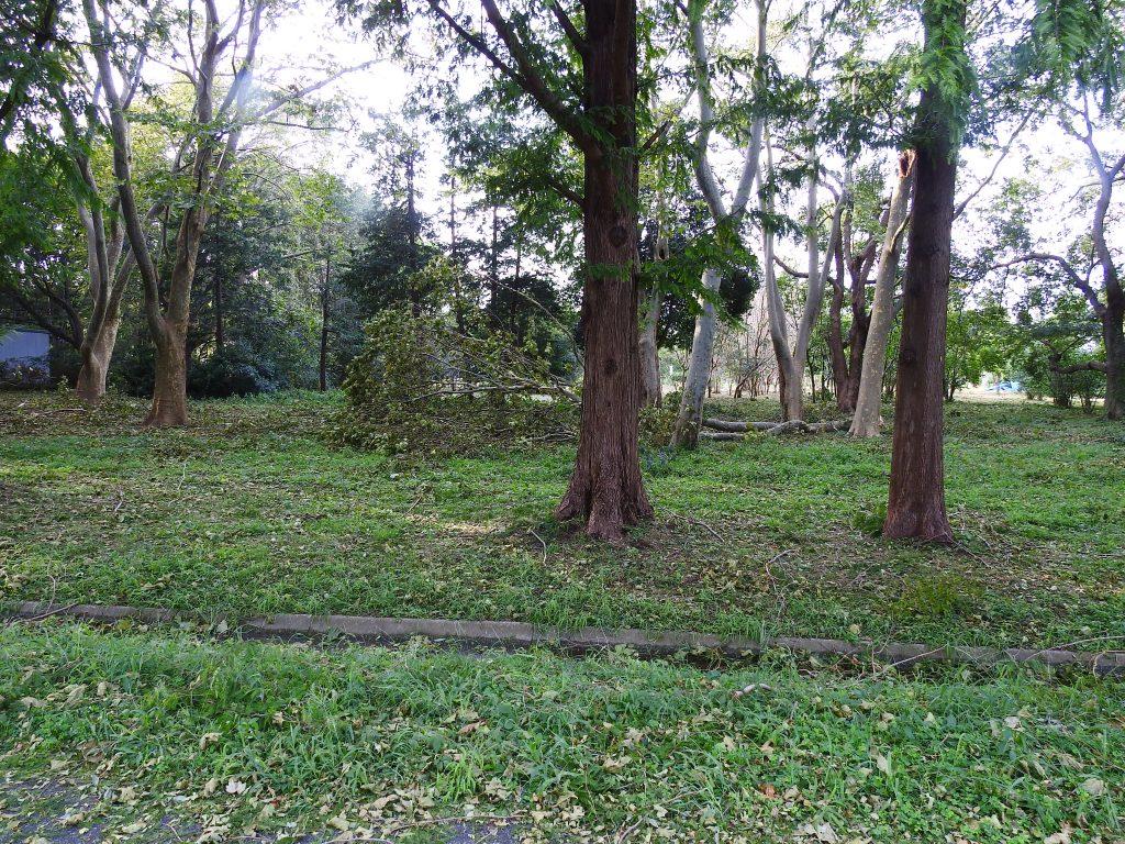 台風で倒れた樹木2