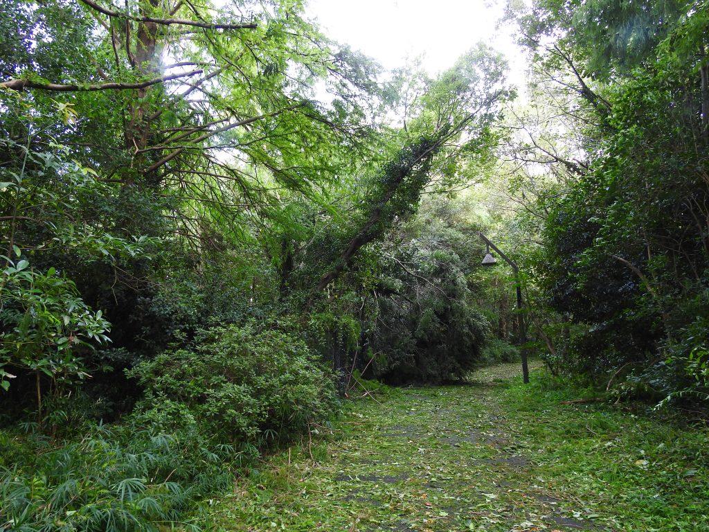 台風で倒れた樹木4