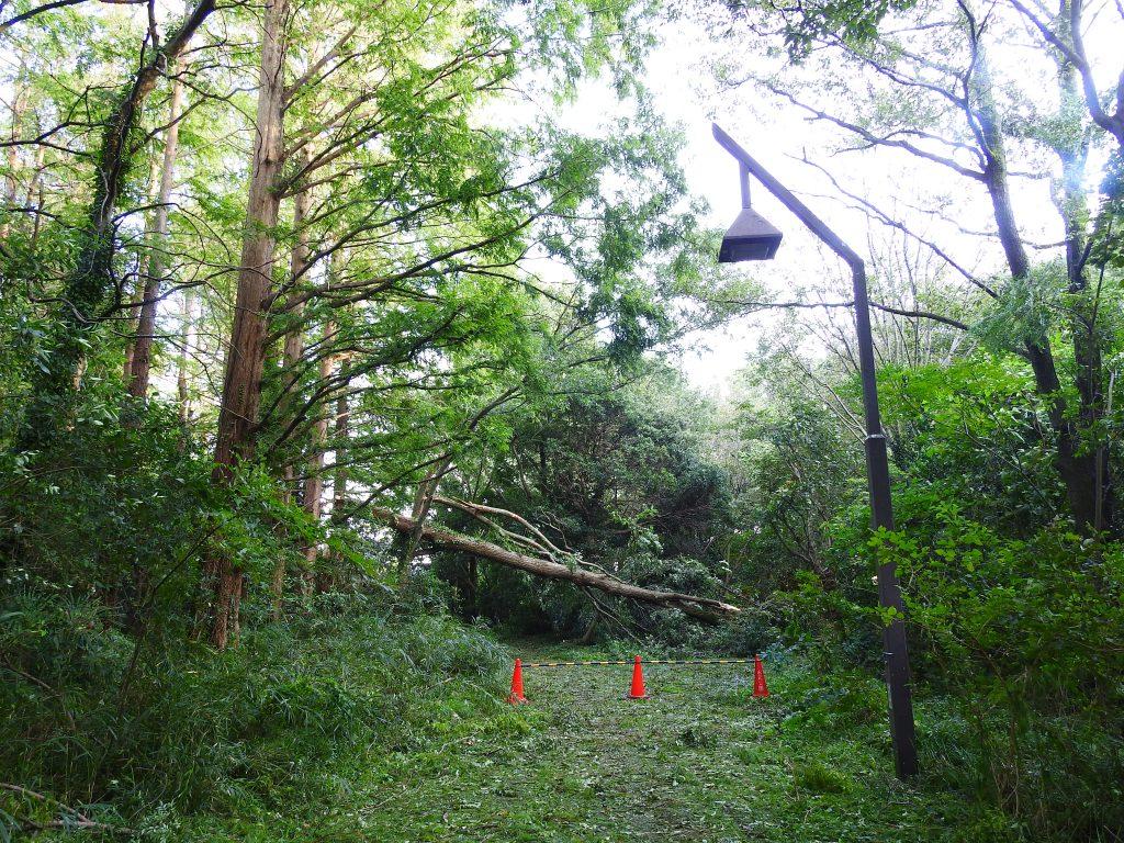 台風で倒れた樹木5