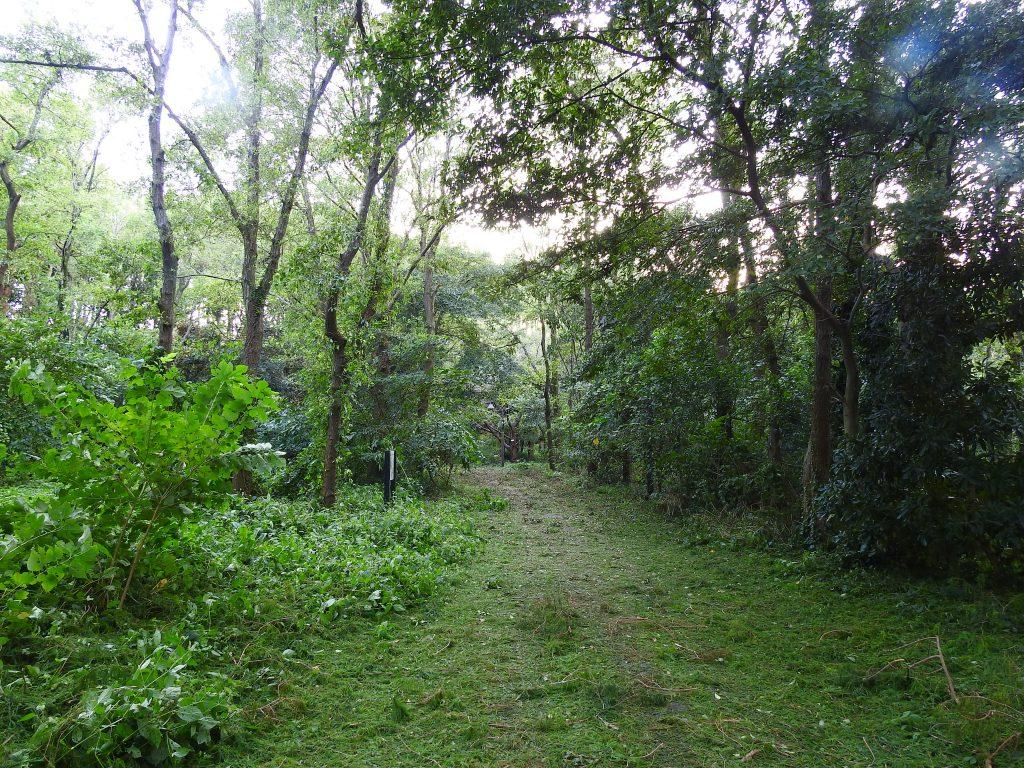 台風で折れ落ちた枝や葉で埋まった通路