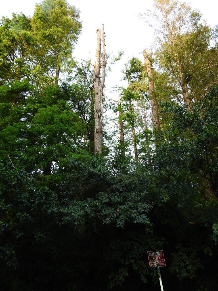 台風で折れた樹木7:34